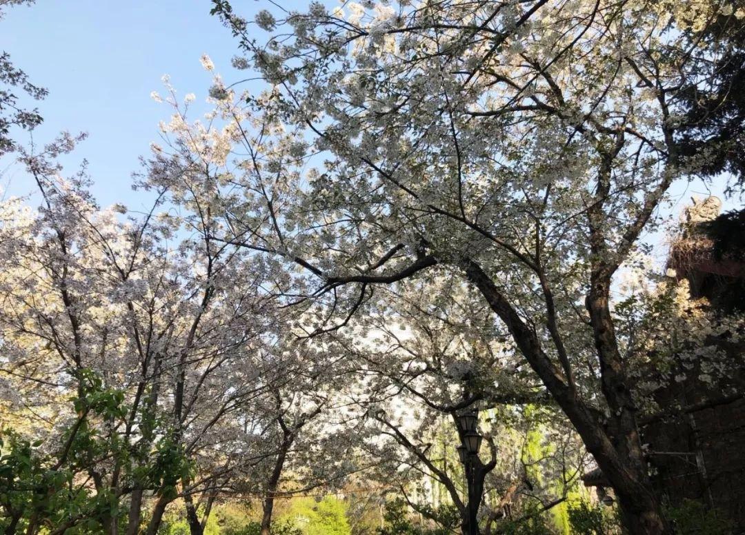 """""""最美是春天""""春季主题摄影作品赏析"""